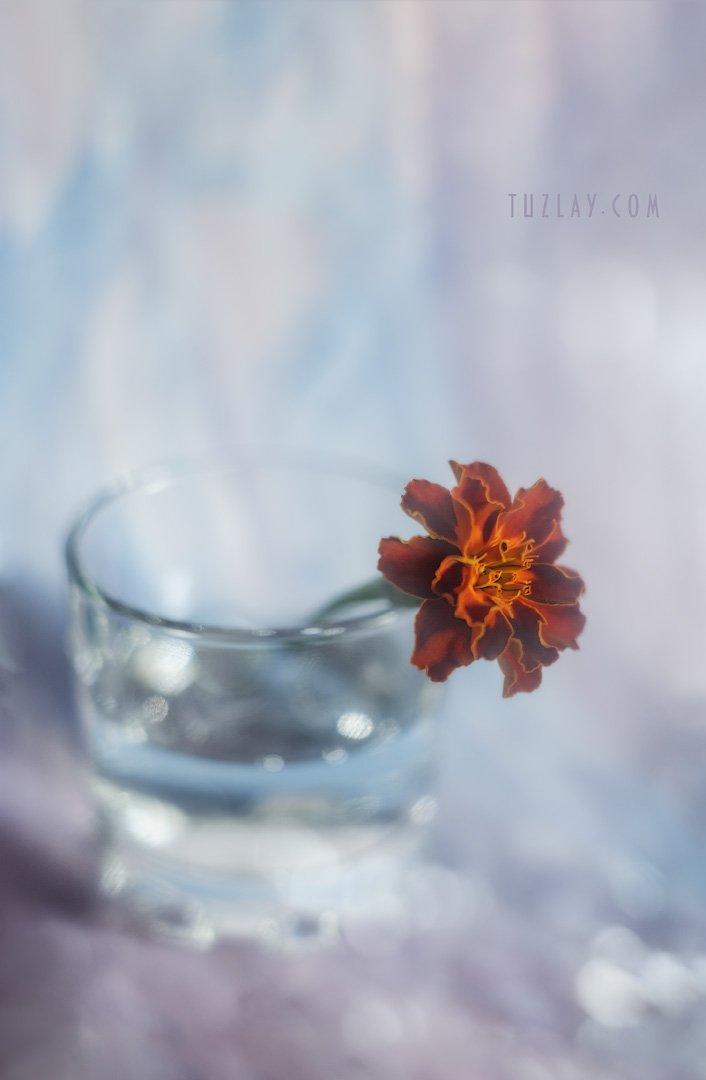 оранжевый цветок, лето в стакане, гелиос 44-2, Владимир Тузлай