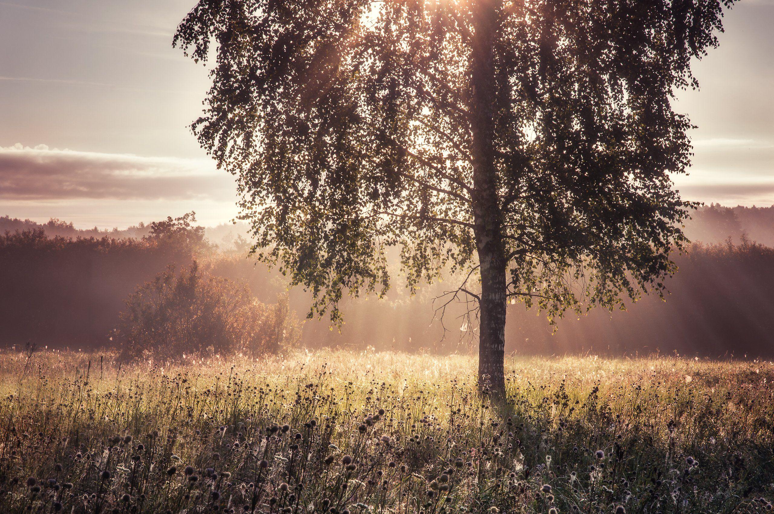 природа, рассвет, туман, солнце, пейзаж, nature, dawn, sun, fog, landscape, Алексей Сергованцев