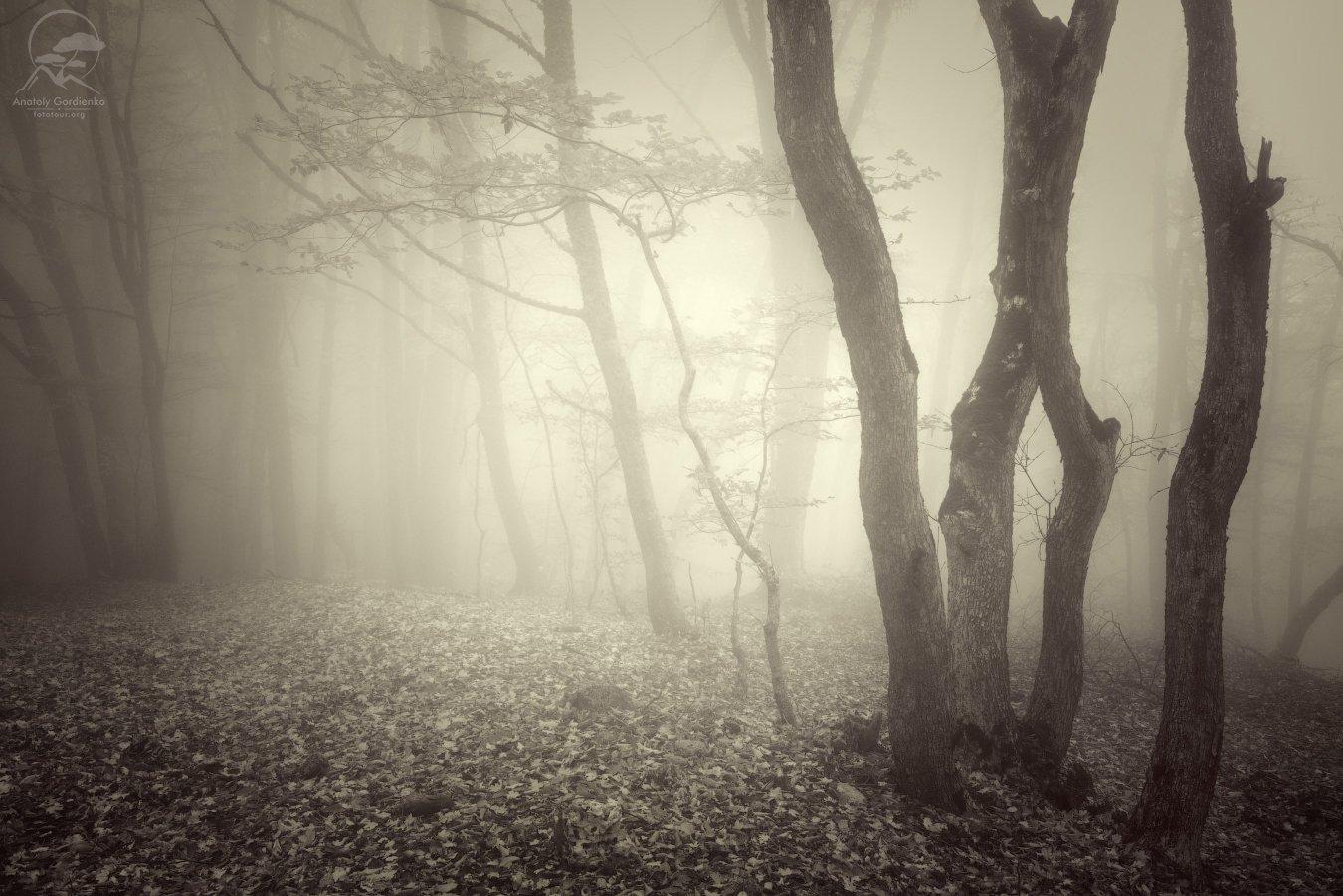 пейзаж, природа, лес, туман, осень, крым, демерджи, Анатолий Гордиенко www.fototour.org