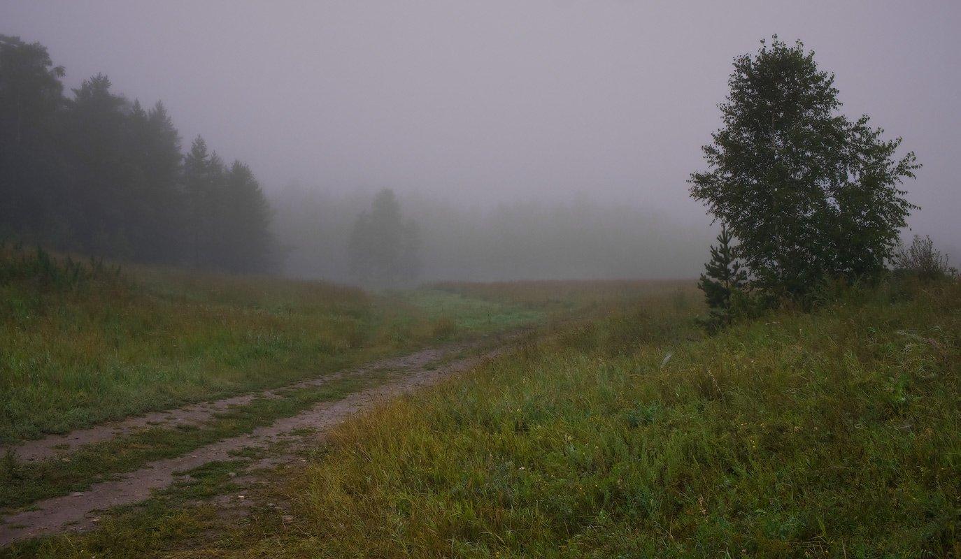 туман, лес, Андрей Журавлев