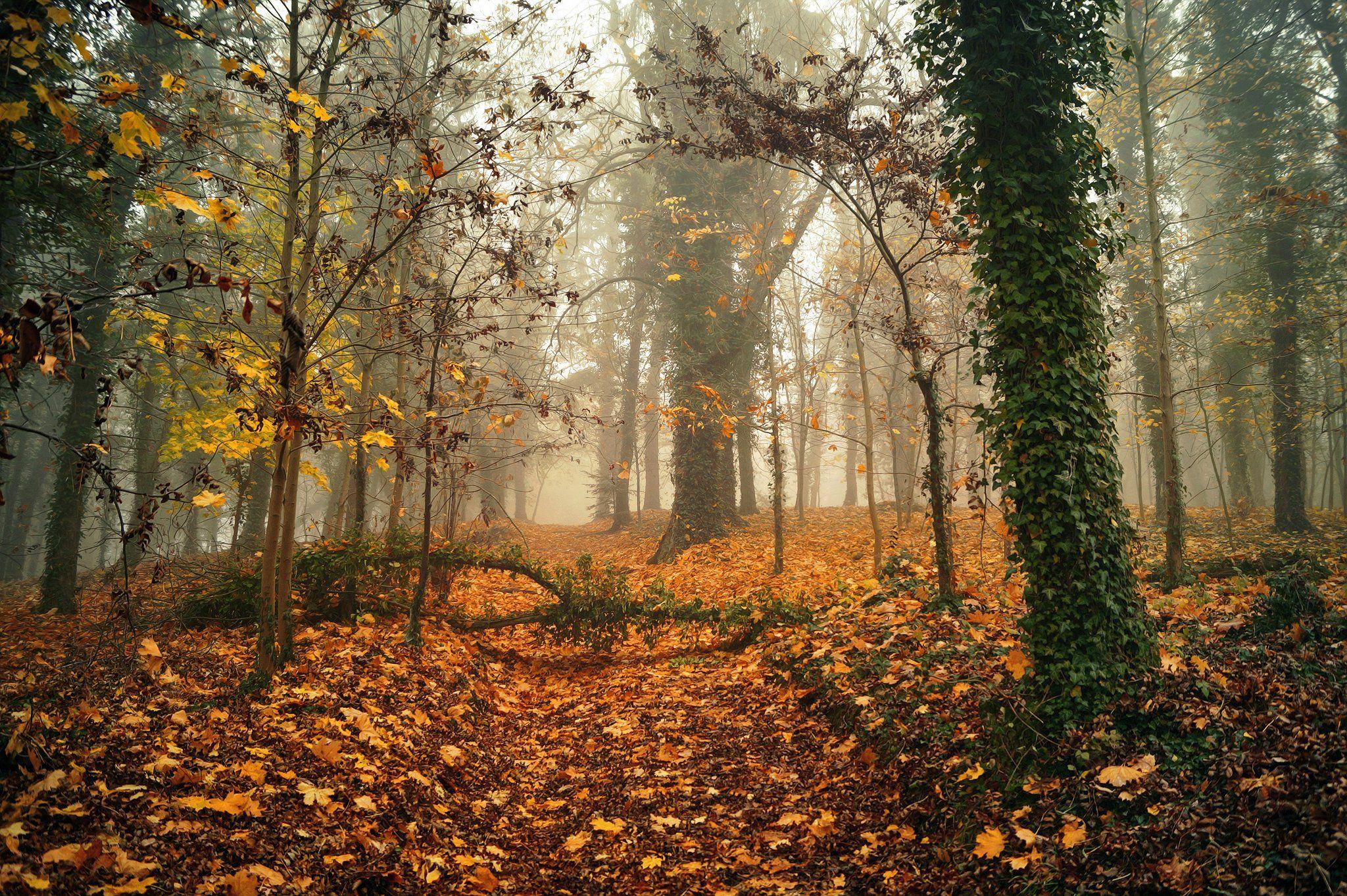 autumn, park, magic, mist, foggy, sony, dranikowski, trees, Radoslaw Dranikowski
