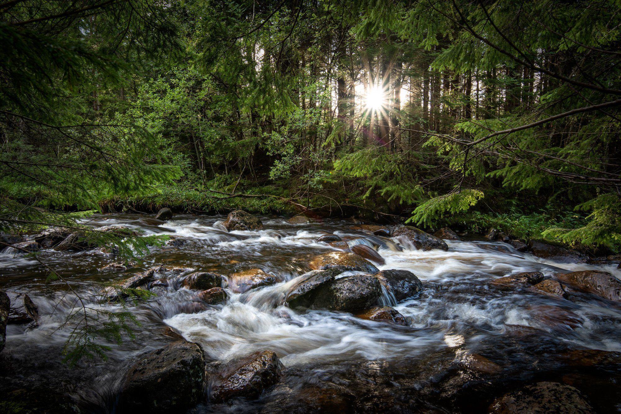 nisi filters, landscape, long exposure, forest, river, sun, green, water, Sylwia Grabinska