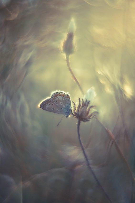 butterfly, nature, Gabriel Prescornita