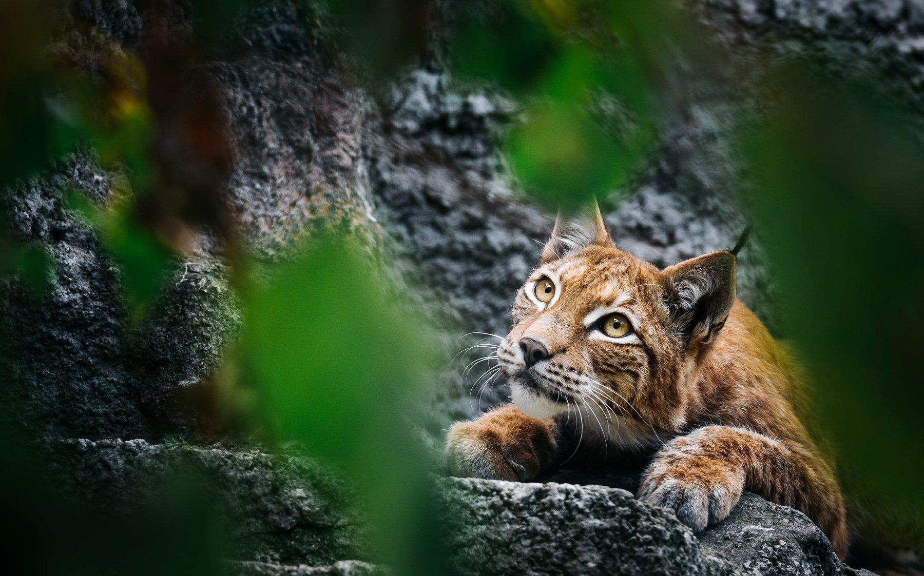 animals, nature, travel, life, cats, Андрей Лободин