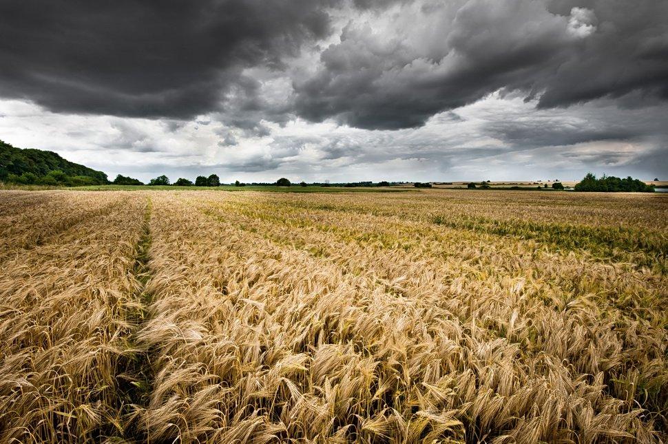 небо ,тучи, поле, буря, Харланов Олександр