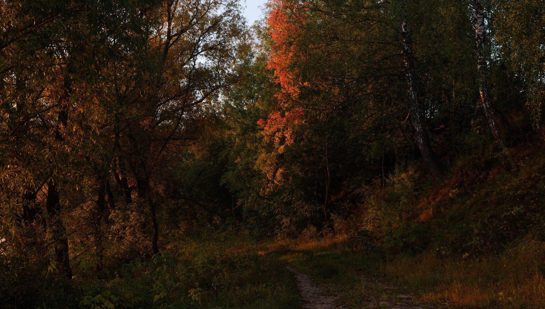 осень, октябрь, желтые листья, лучи, Купреев Юрий