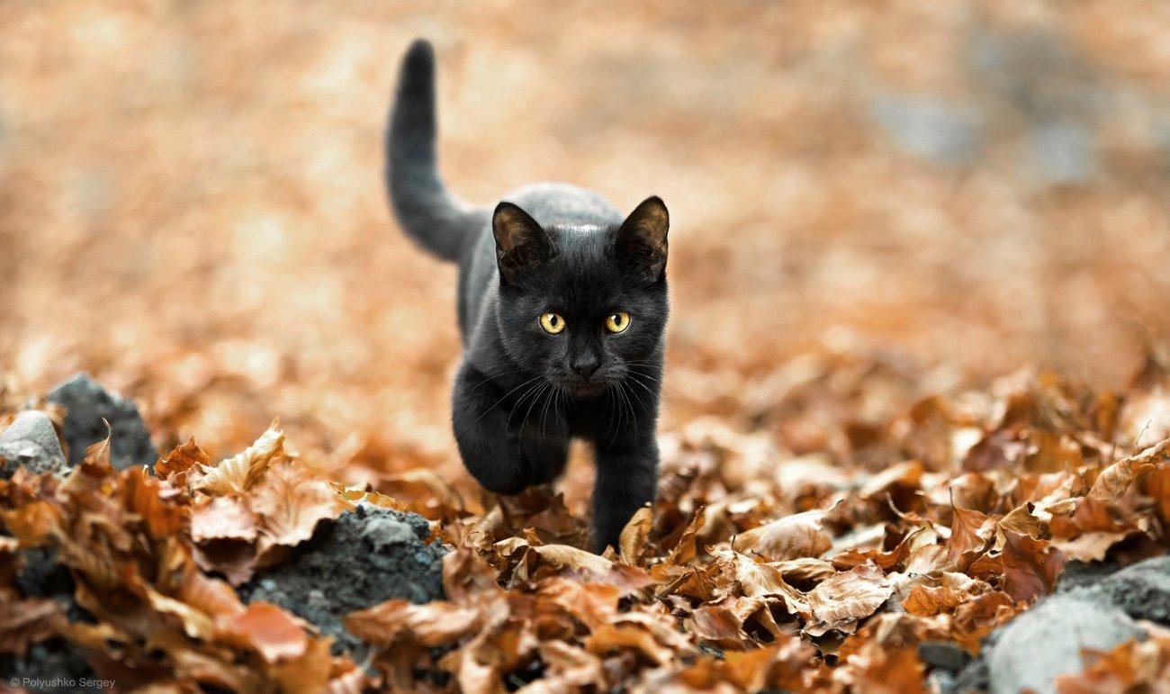 cat, Полюшко Сергей