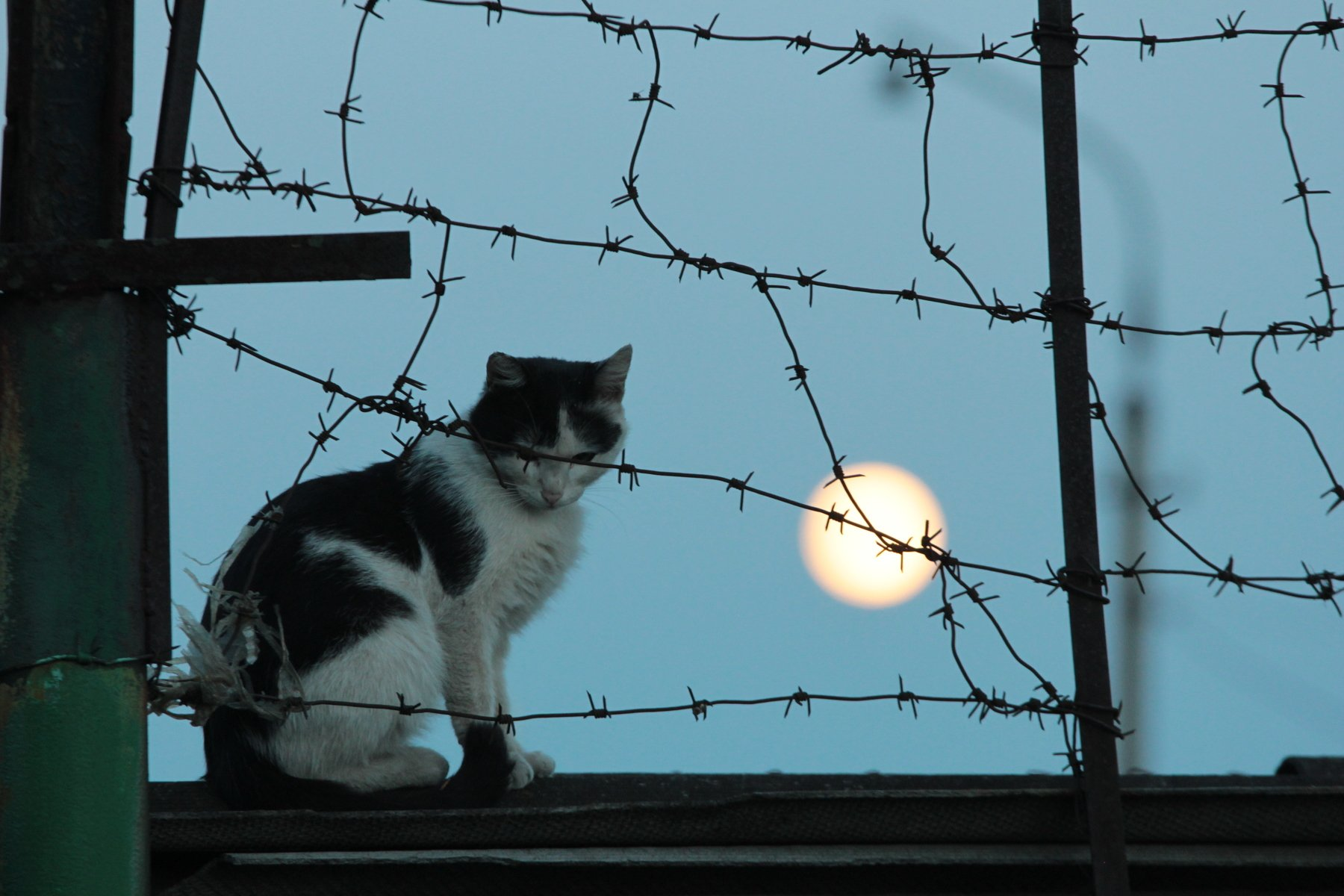 кот, Артем