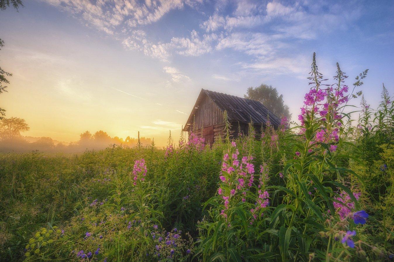 утро, пейзаж, небо, рассвет, цветы, природа, Устюжанин Михаил