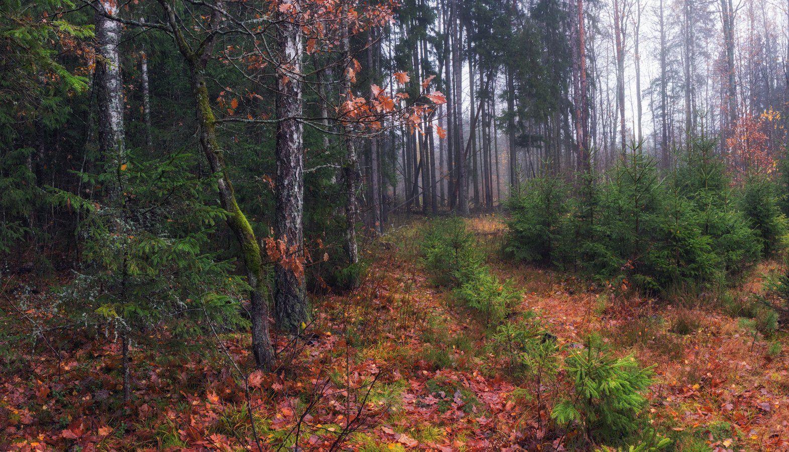 ноябрь, лес, осень,, Сергей Шабуневич