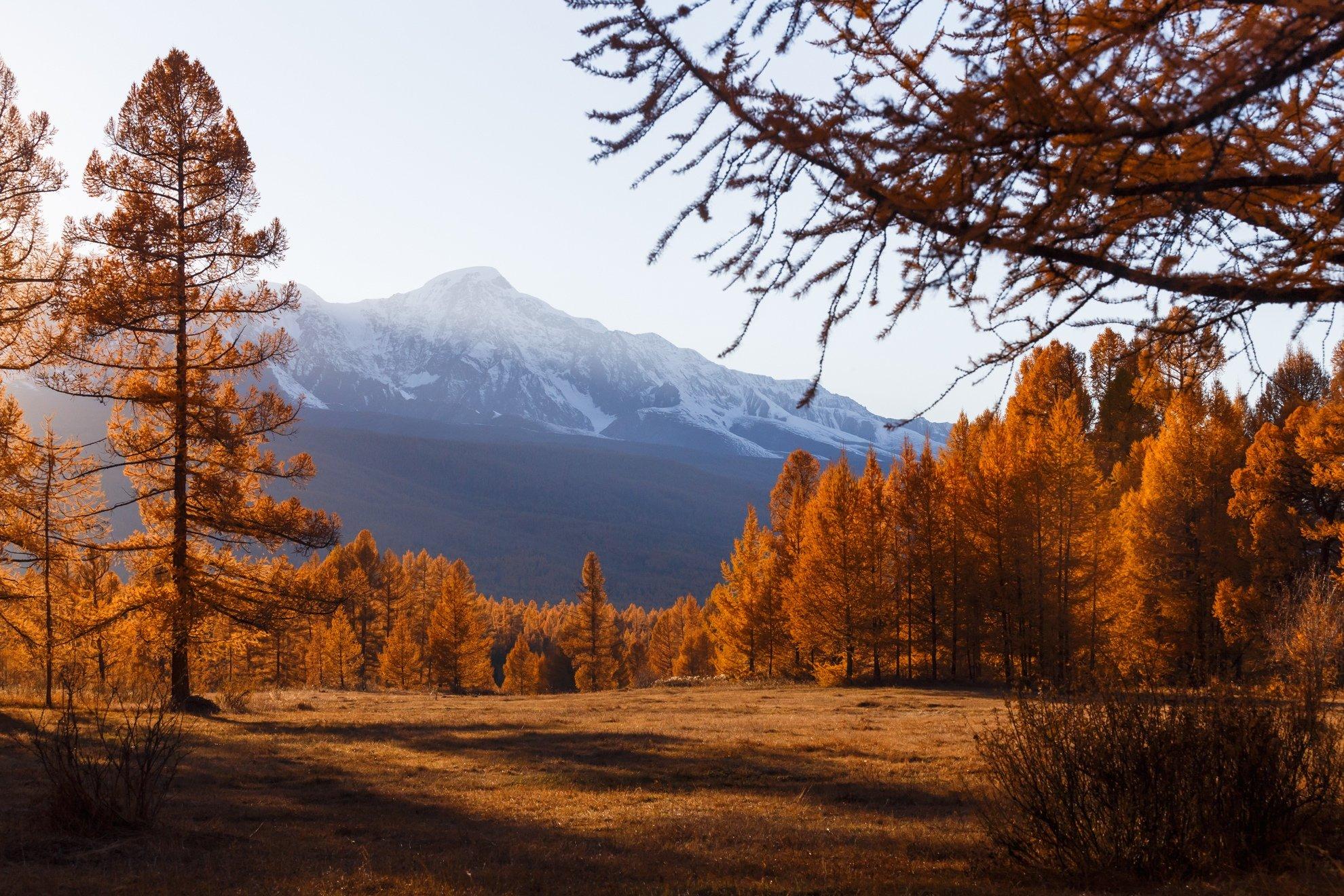 природа, алтай, горы, лес, осень, закат, солнце, nature, sunset, mountains, forest, autumn, light, Станислав Попов