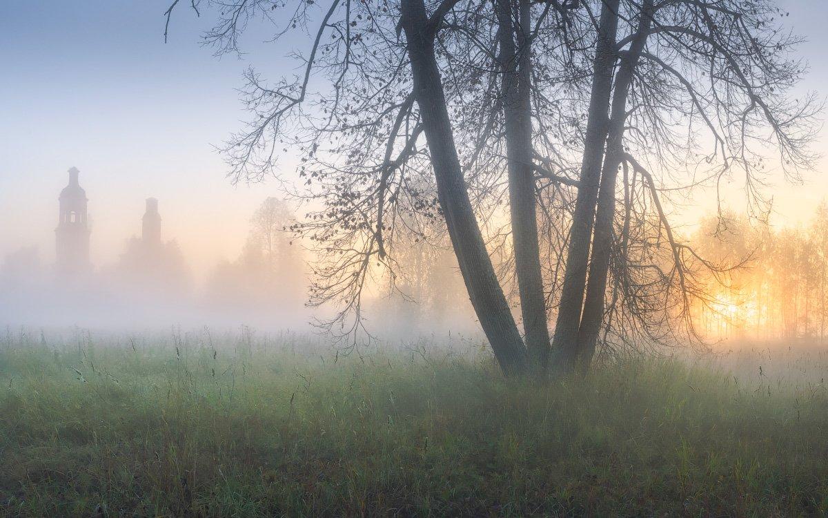 утро, туман, дерево, осень, Дмитрий Медянцев