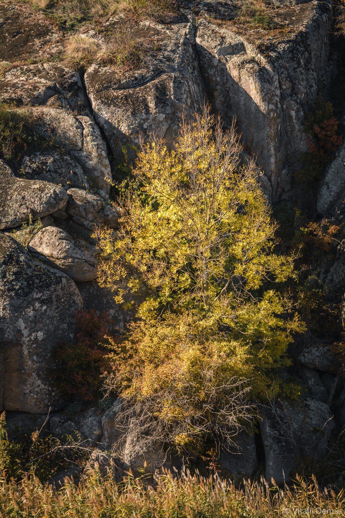 осень, желтый, закат, вечер, природа, свет, солнечный свет, контраст, дерево, Виталий Демус