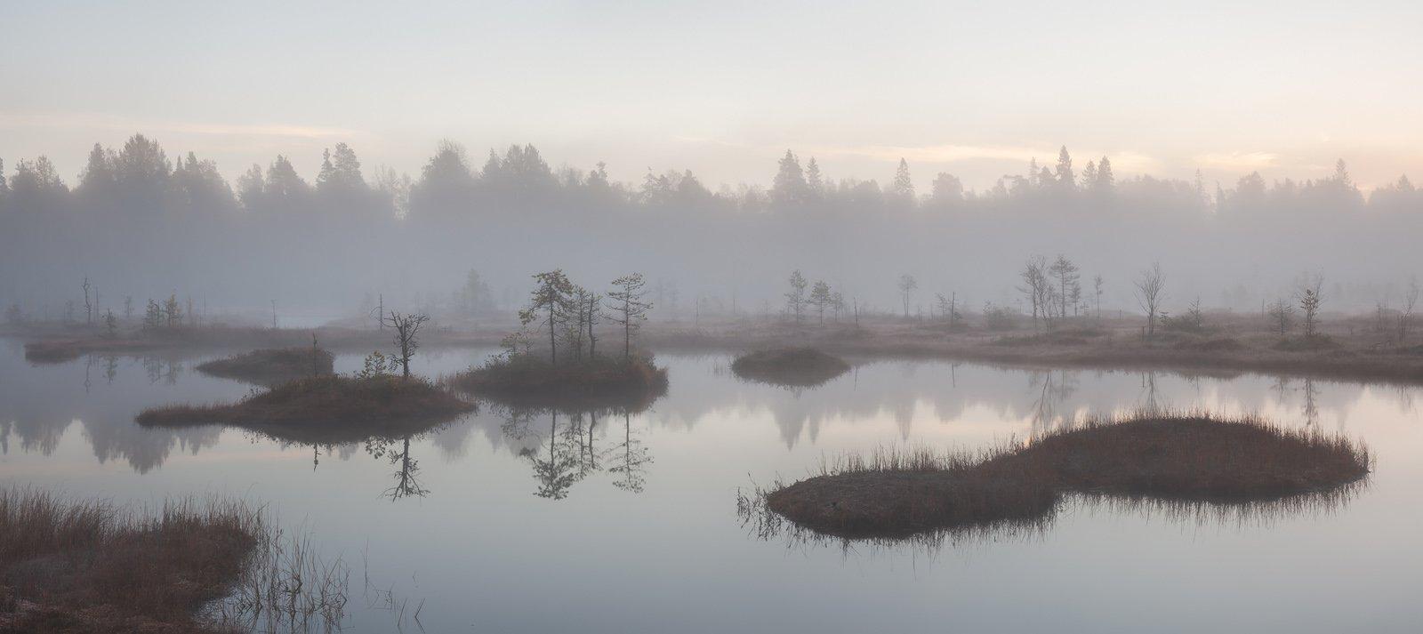 природа ленинградской области, ленобласть, болото, соколий мох, болотный тур, Арсений Кашкаров
