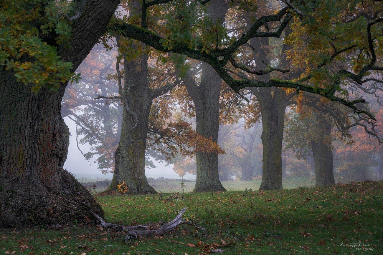 autumn, branches, fall, fall trees, fog, foggy, foliage, grass, horse, horse pasture, horses, leaf, meadow, mist, misty, moss, nature, oak, oak leaves, oak pasture, oak trees, oak -wood, orange, outdoor, pasture, tree branches, tree trunk, trees, wood, ye, Ludwig Riml