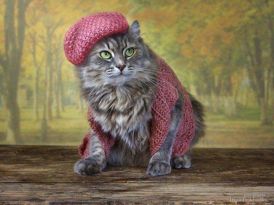 домашние животные, осень, листопад, кошка Масяня, теплая одежда, Ирина Приходько