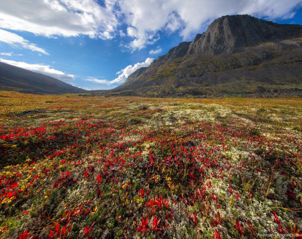 перевал,рудник,север,сейдозеро,осень,тундра,утро,горы,, Алексей Ретюнских
