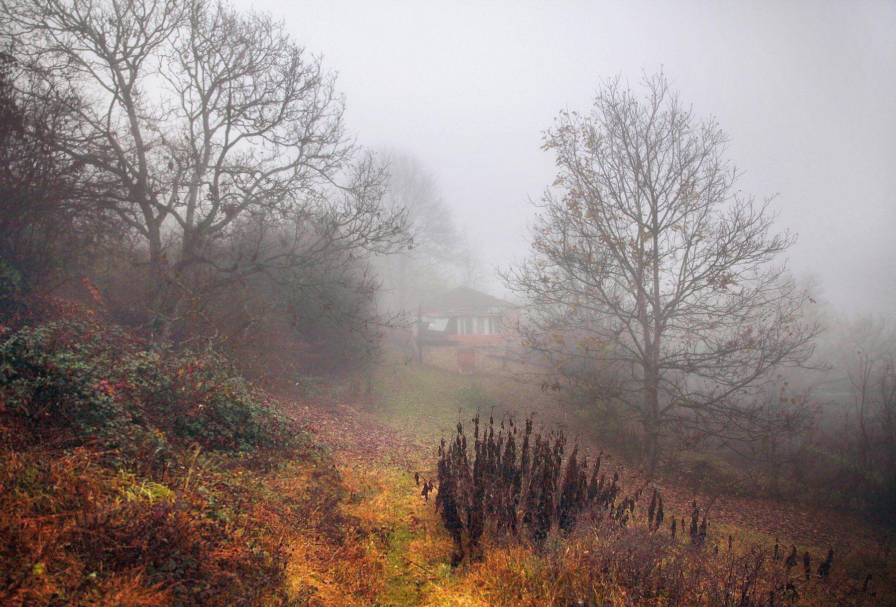 осень,природа,село,туман, Марат Магов