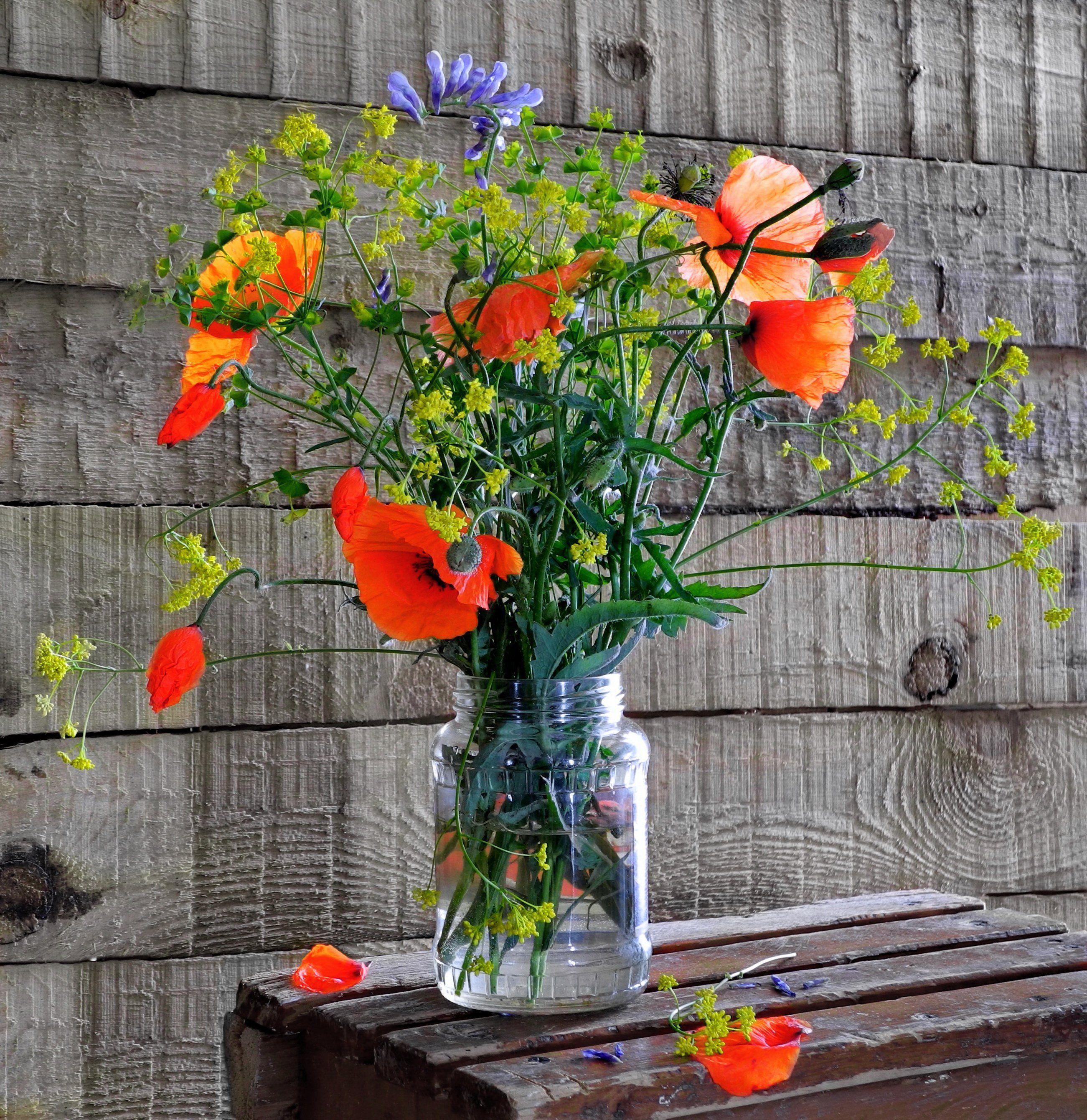 цветы маки букет, Сергей Фунтовой