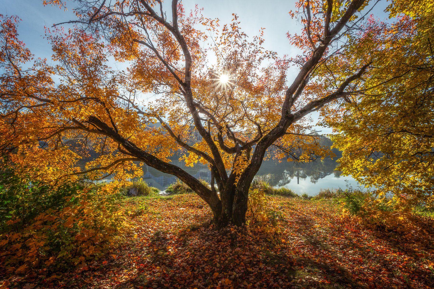 природа, пейзаж, осень, подольск, Мартыненко Дмитрий