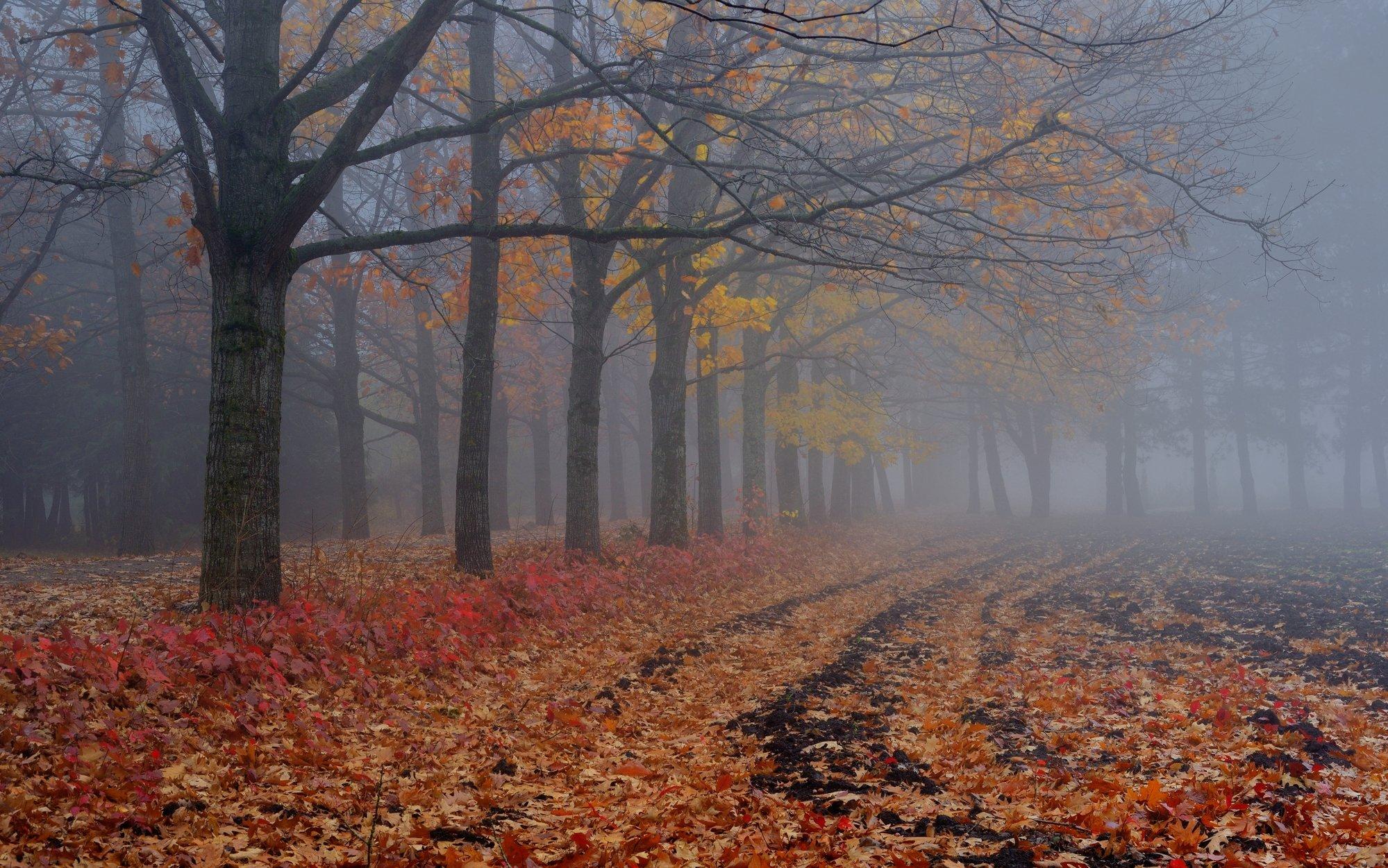 осень рассвет аллея туман, Александр Жарников