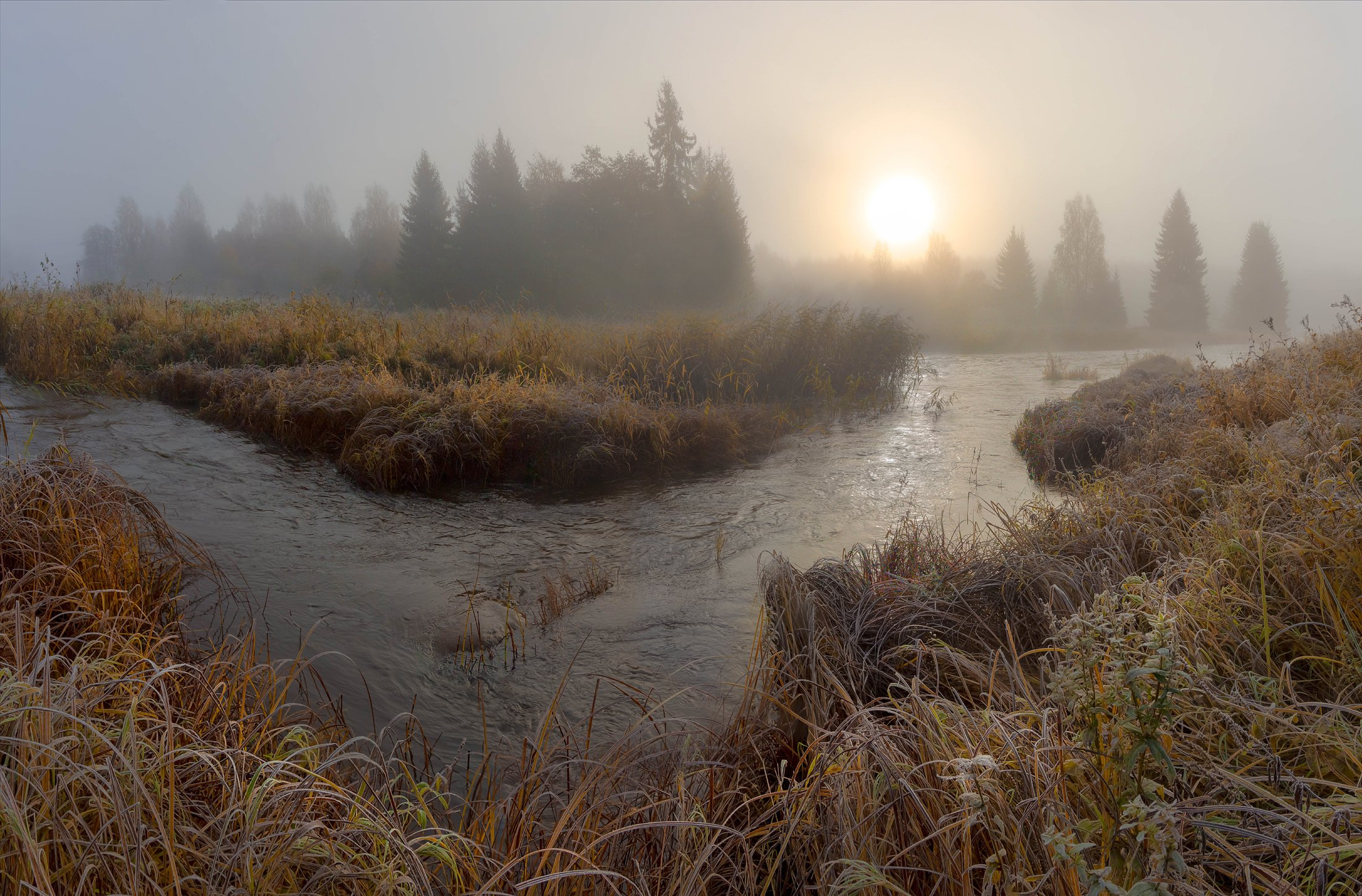 болото, рассвет ,туман, Vaschenkov Pavel