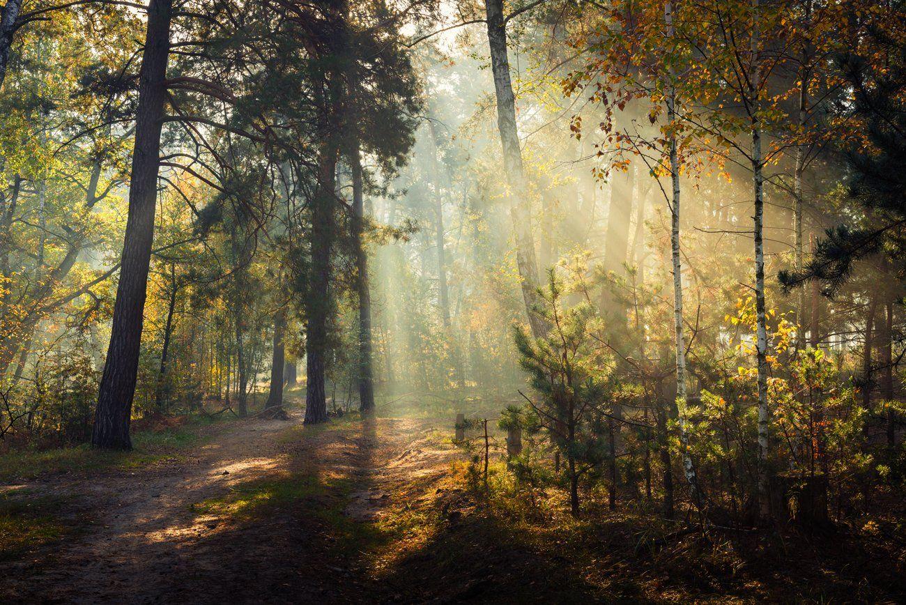 лес, осень, октябрь, утро, рассвет, туман, лучи, Галанзовская Оксана
