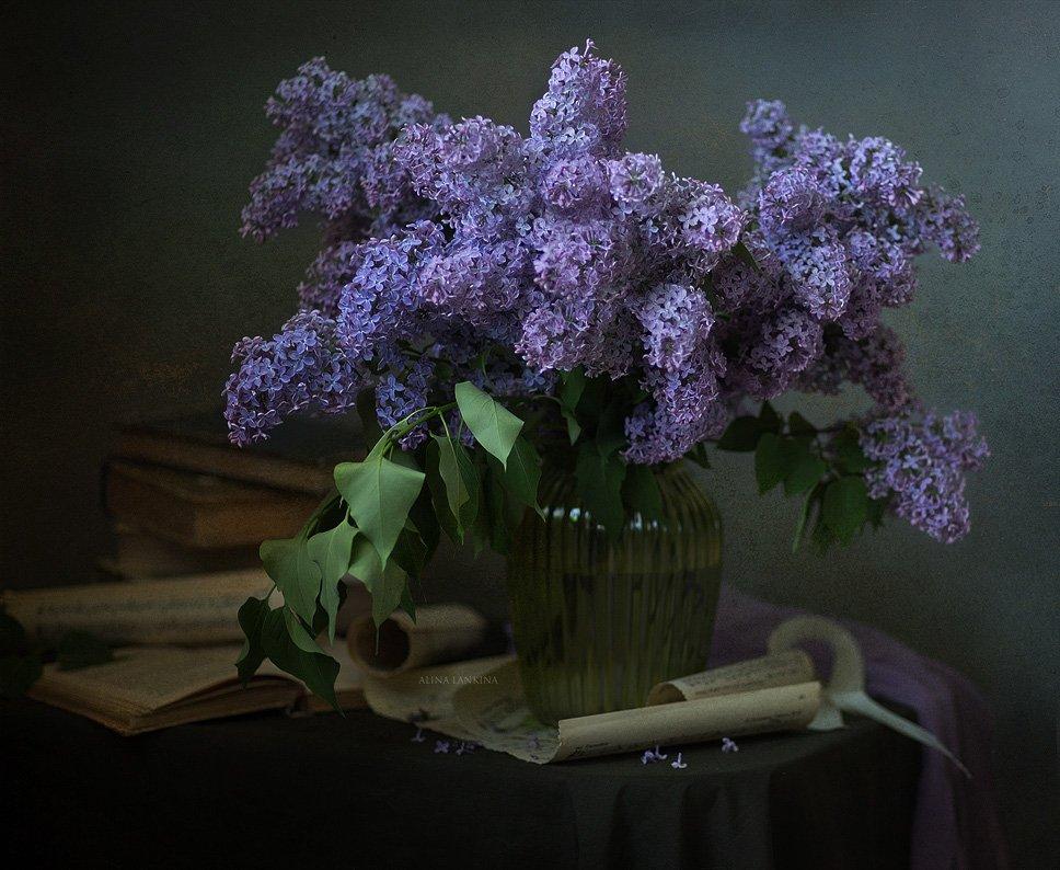 сирень, натюрморт, весна, май, книга, свет, вечер, настроение, алина ланкина, цветы, ваза, букет, Алина Ланкина
