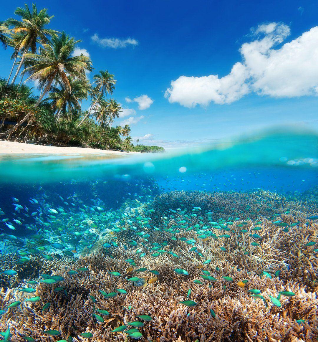 underwater, indonesia, seaworld, fish, Soft Light