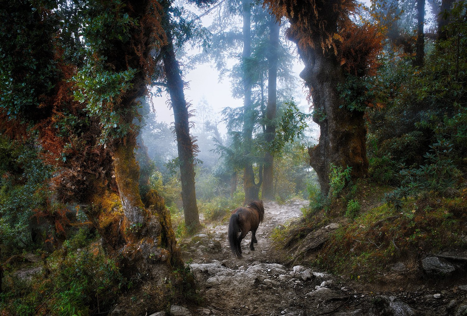 nepal, mountains, forest,, Soft Light