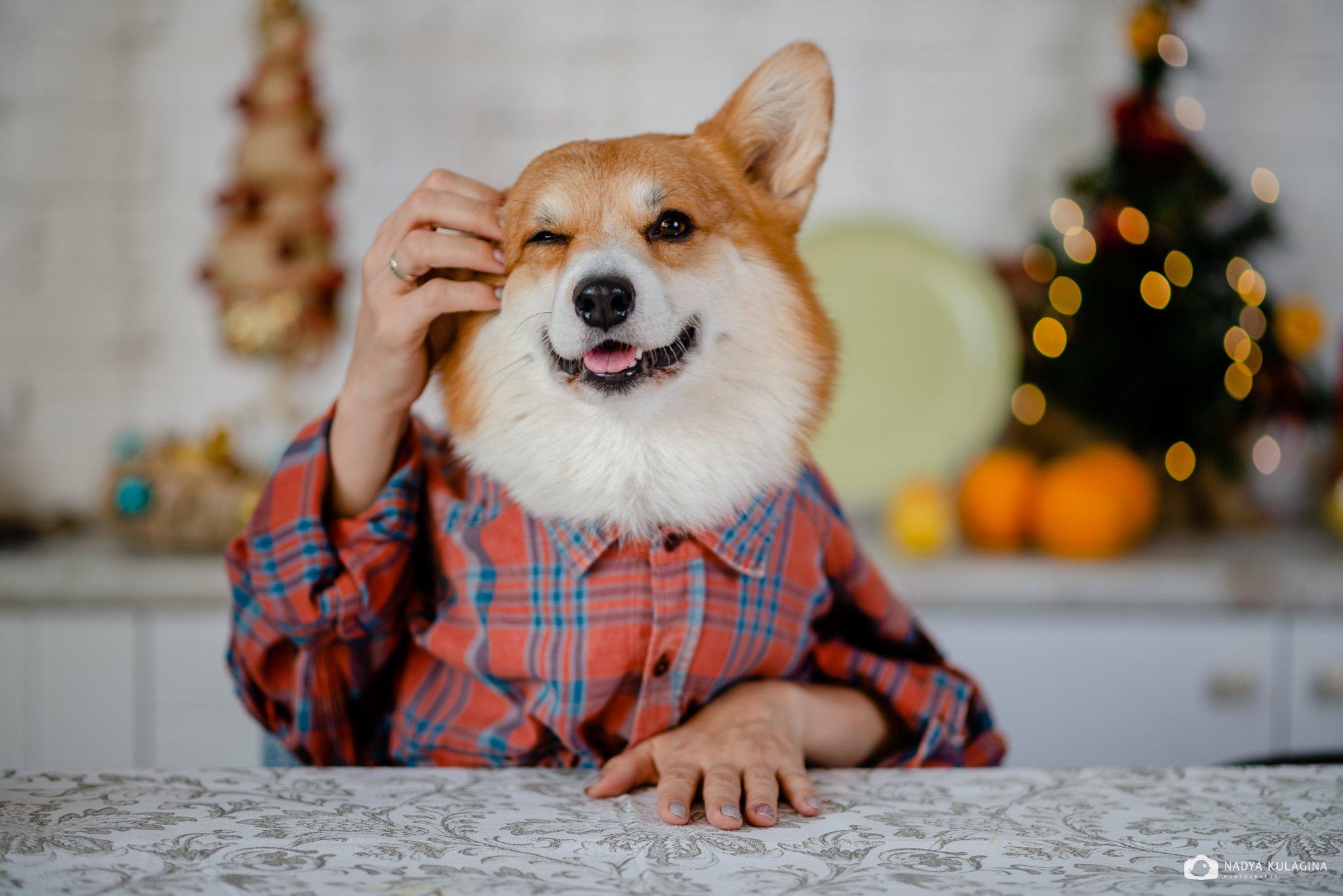 dog, pup, nadeika