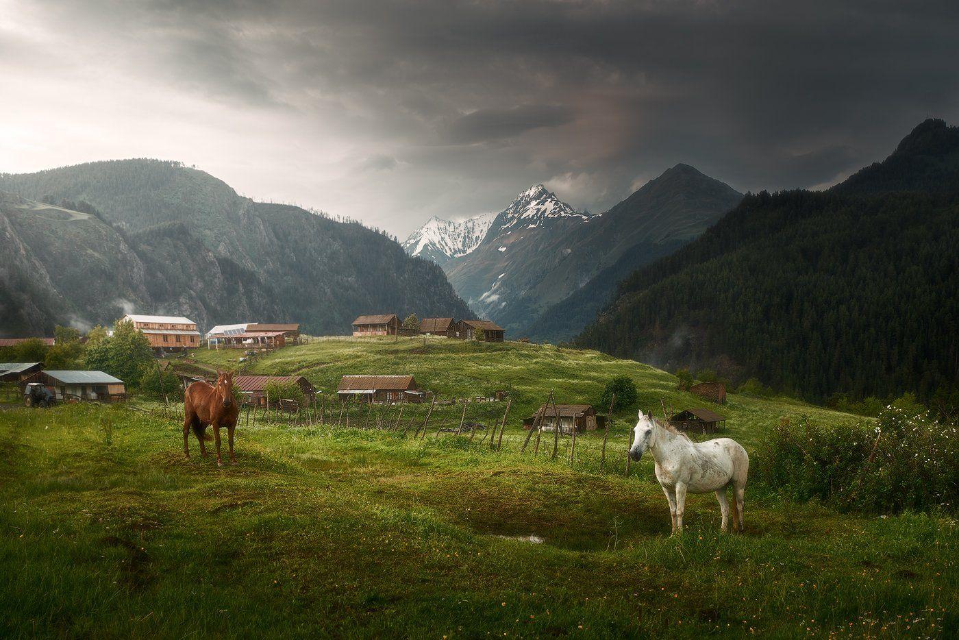 georgia, tuhetu, грузия, тушетия, лошади,, Soft Light