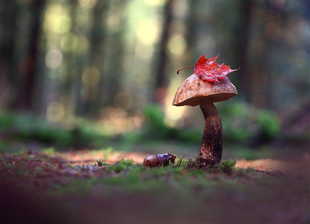 Осень,лес,гриб., Viktor Schneider