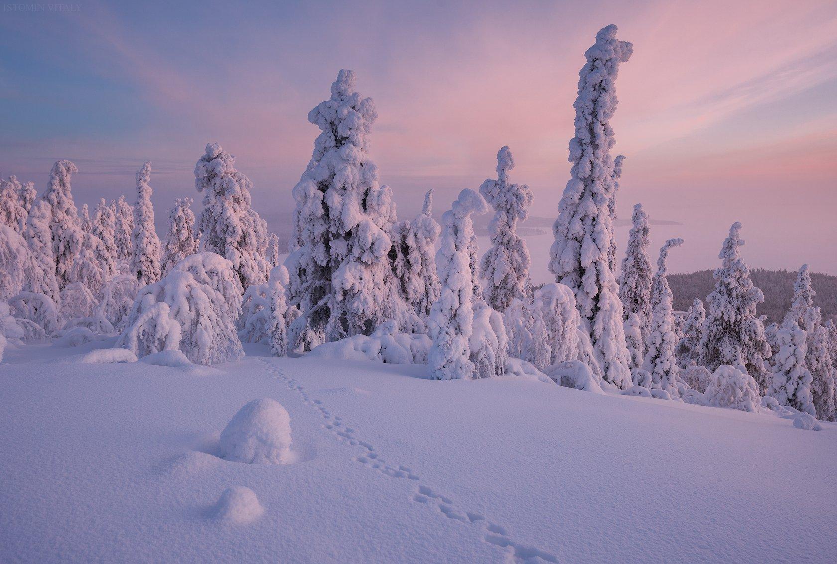 пейзаж,зима,снег,россия,закат,следы,кольский,север, Истомин Виталий