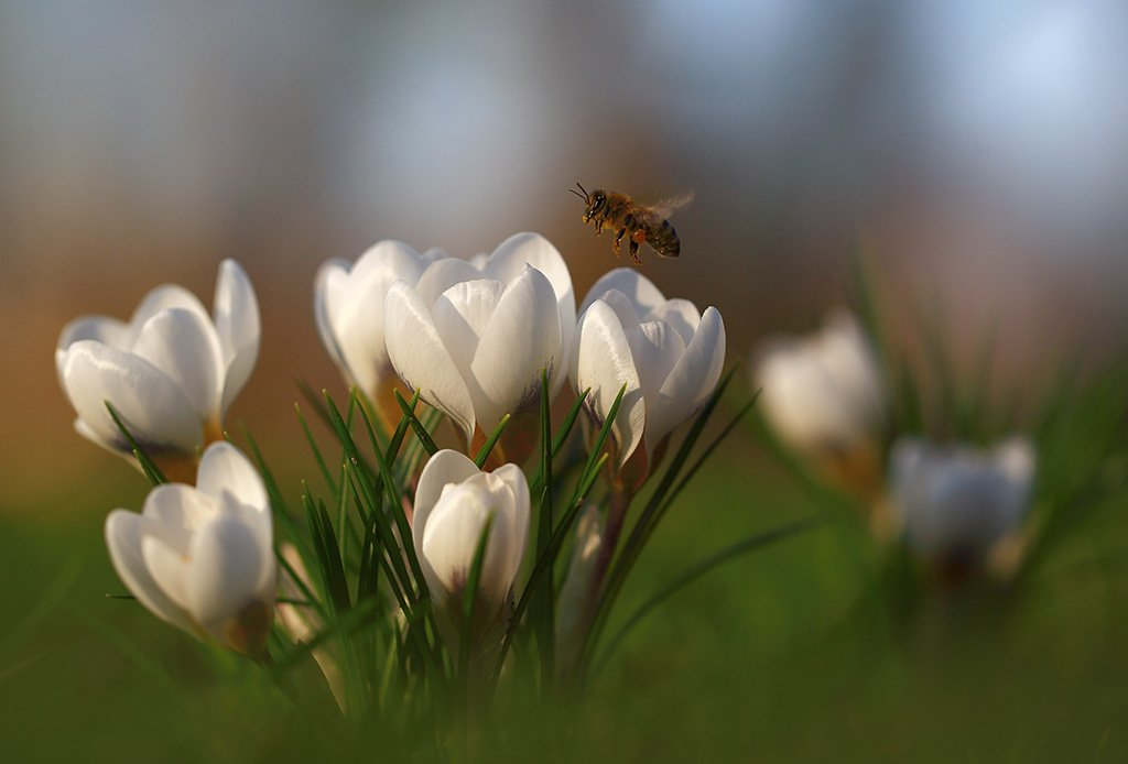 Парк,весна,цветы., Viktor Schneider