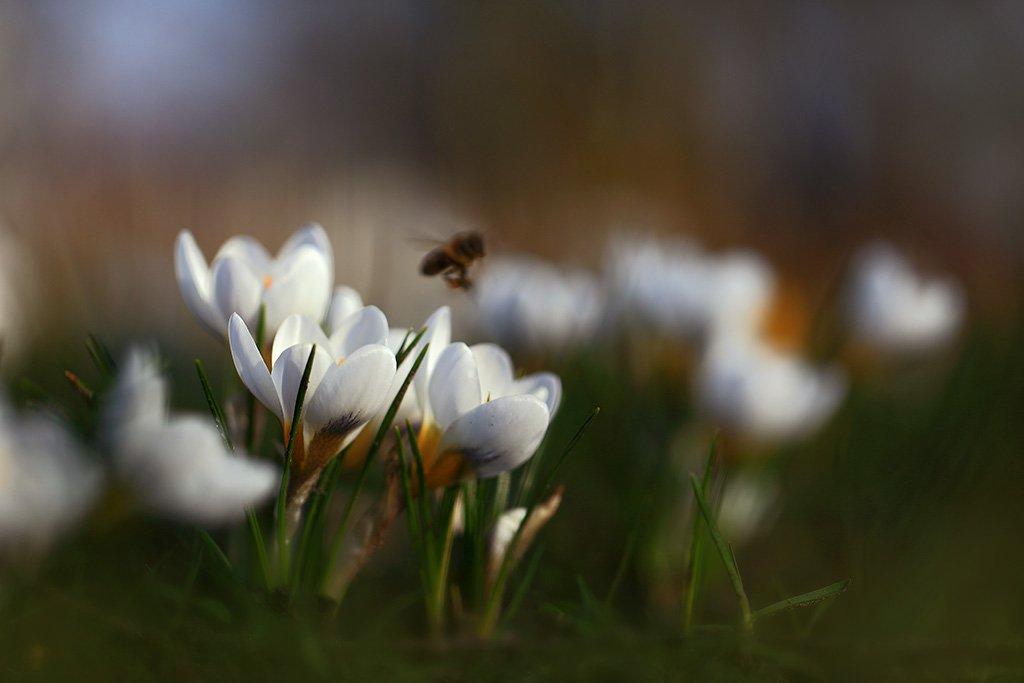 Весна,цветы,солнце., Viktor Schneider