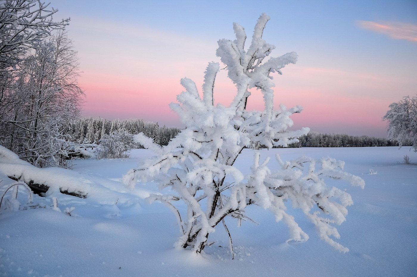 удмуртия, зима, иней,кез, АНДРЕЙ LOZHKIN