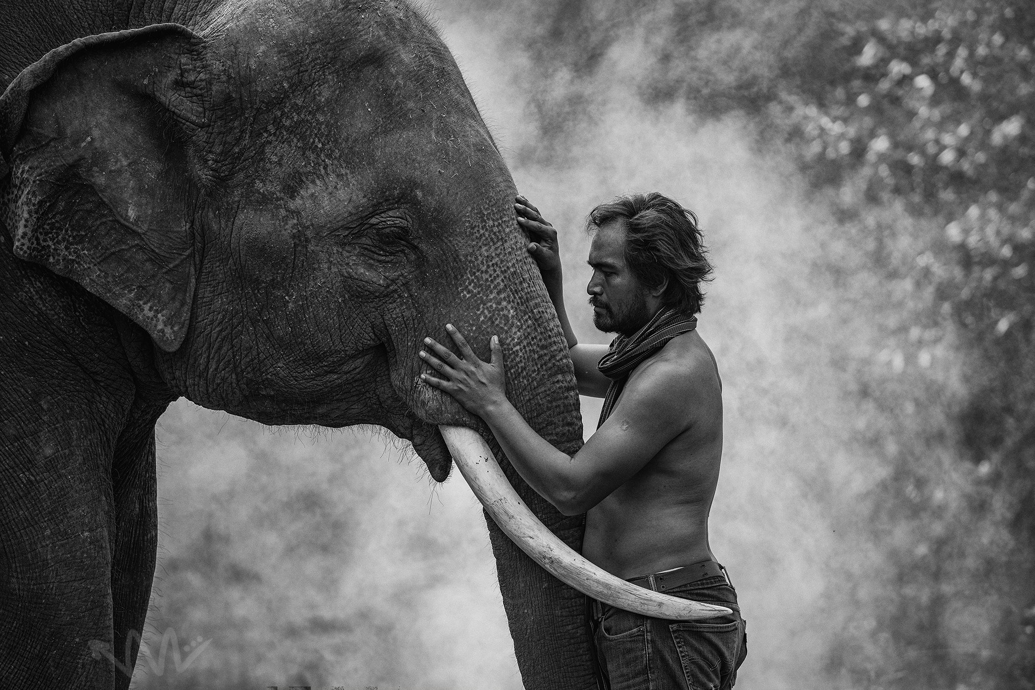 elephant,Thai,Thailand,BW,Animal,Portrait,man,mahout,, SUTIPOND SOMNAM