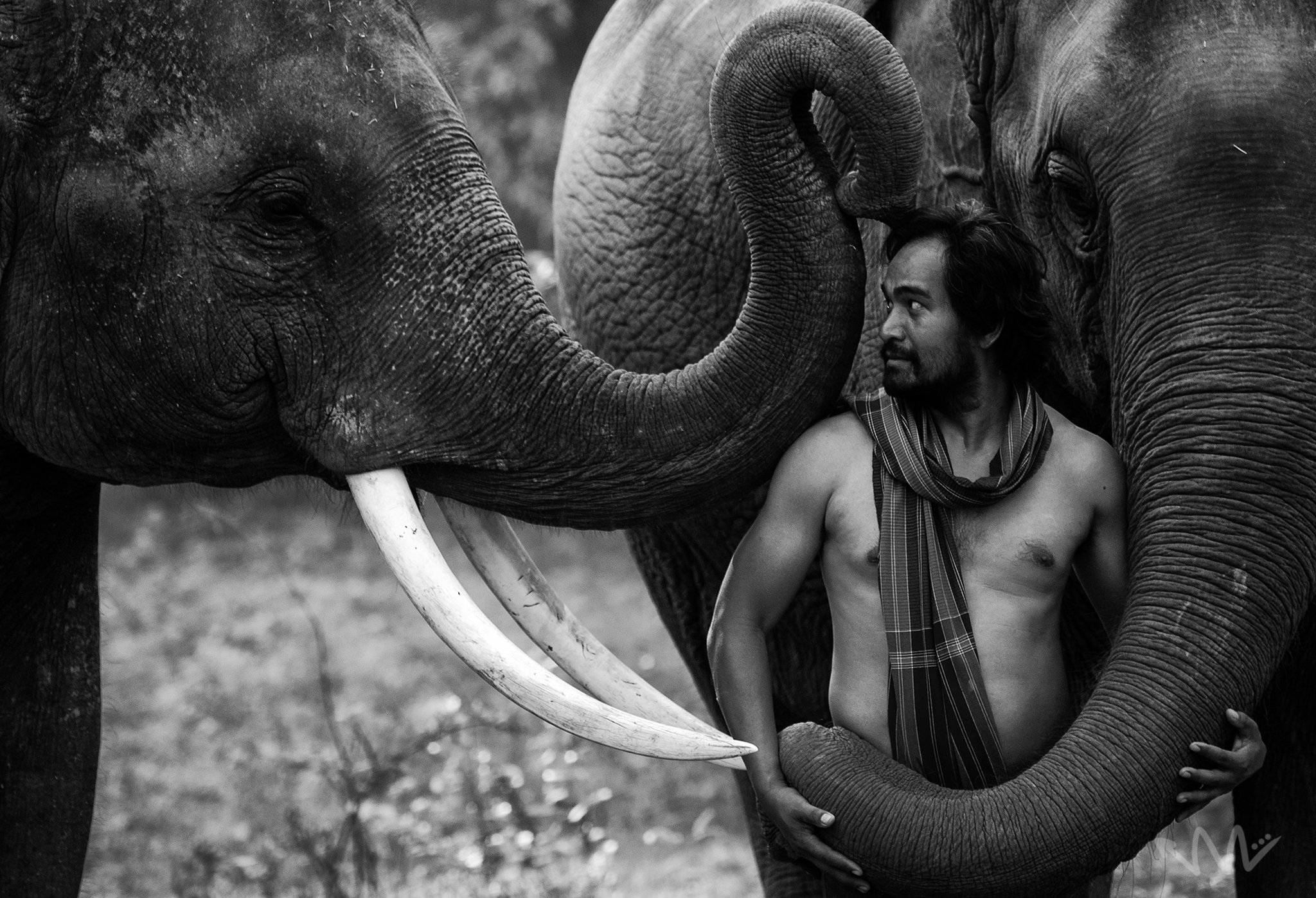 portriat,animal,elephant,man,mahout,Thailand,wildlife,male,Thai,, SUTIPOND SOMNAM