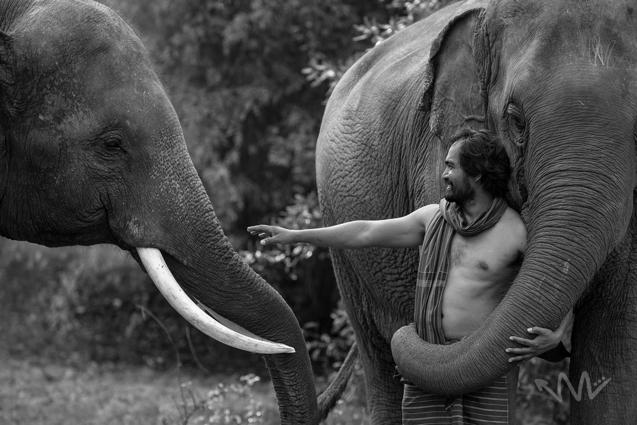 portrait,elephant,animal,man,Thai,animal,asia,, SUTIPOND SOMNAM