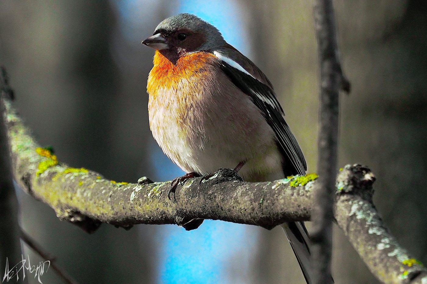 птицы, Александр Мартынов