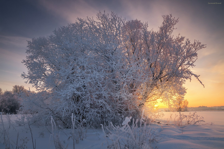 зима, иней, снег, куст, мороз, вечер, закат, поле, Смольский Евгений