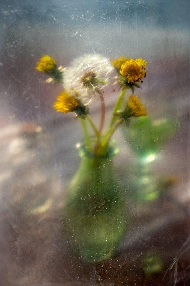 весна, тепло, вестник, одуванчик, цветы, натюрморт, Анна Иванова
