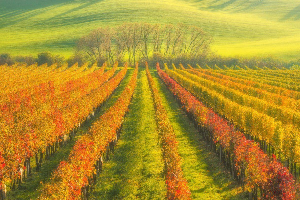 landscape,canon,mist,light,autumn,moravia, Iza i Darek Mitręga