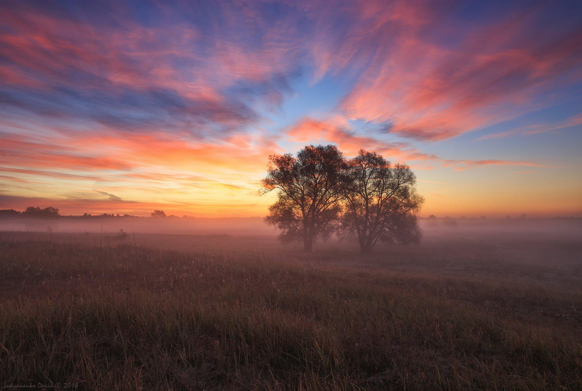 2018, россия, пейзаж, утро, рассвет, туман, облака, деревья, небо, краски, трава, Лукьяненко Денис