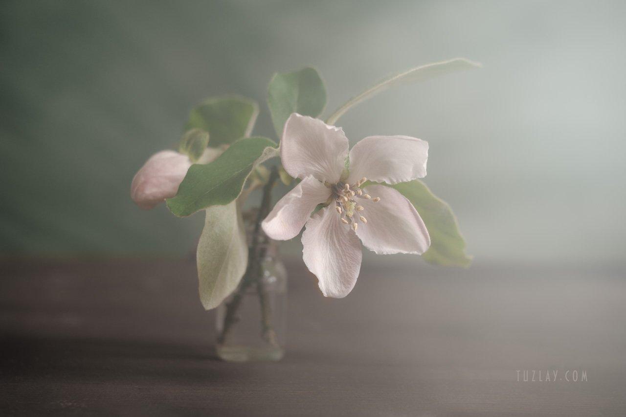 весна во флаконе, пузырек, розовые цветки, цветки айвы, Владимир Тузлай