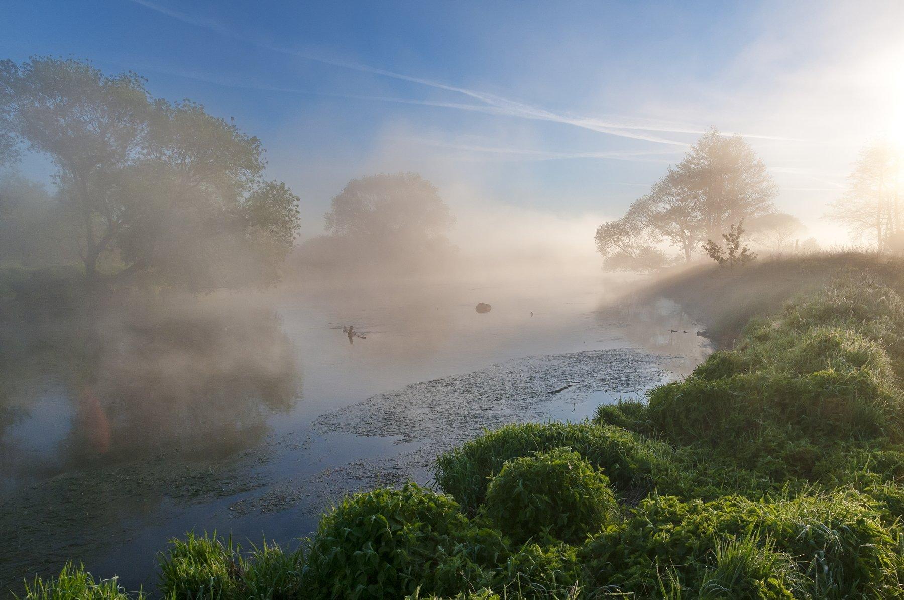 утро, свислочь, туман, пейзаж, Александр Гвоздь