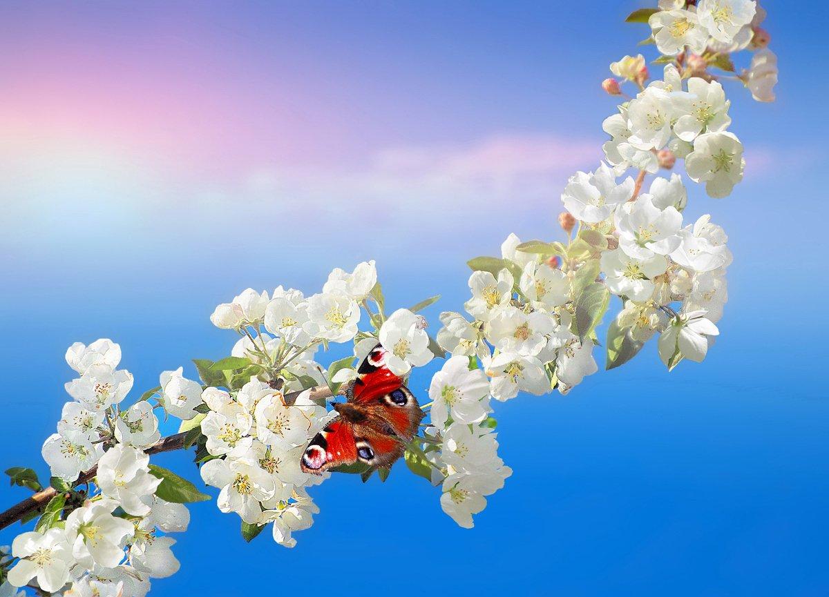 природа, яблоня, весна, бабочка, май, vladilenoff
