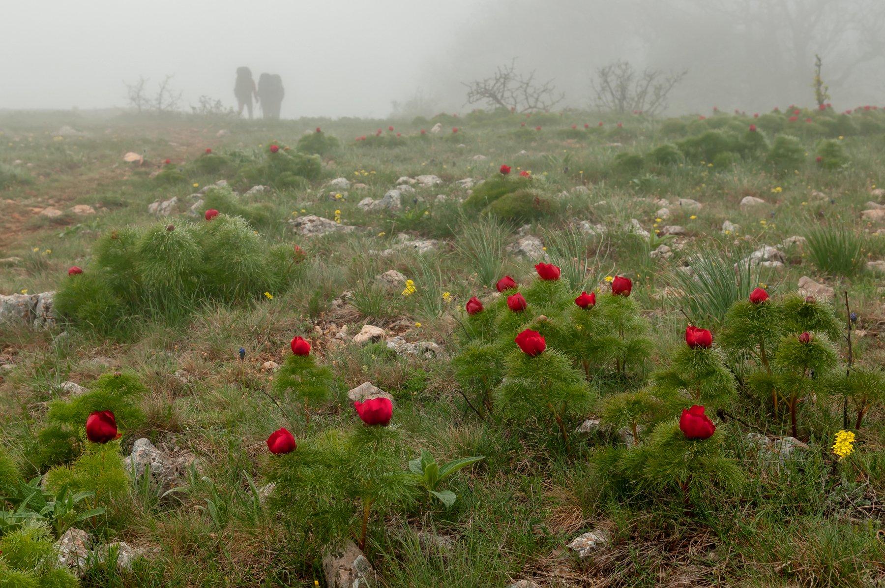 крым весна туман пионы, Yakovlev Artur