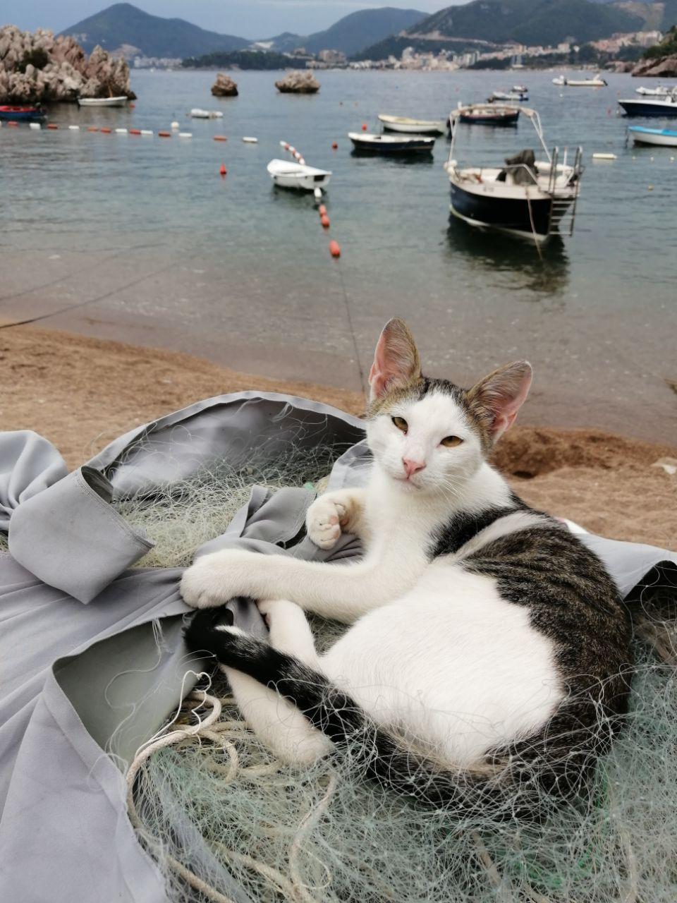 cat , Денис Воронин